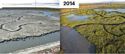 A Roadmap for Wetlands