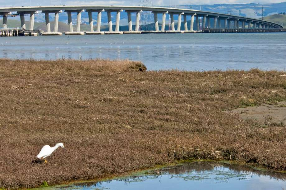 Work to save San Francisco Bay only just begun